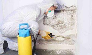 spraying mold remediation