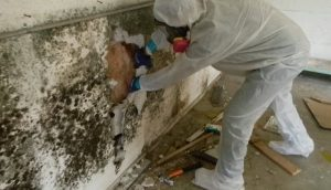 man removal mold from a wall