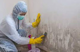 guy removing mold